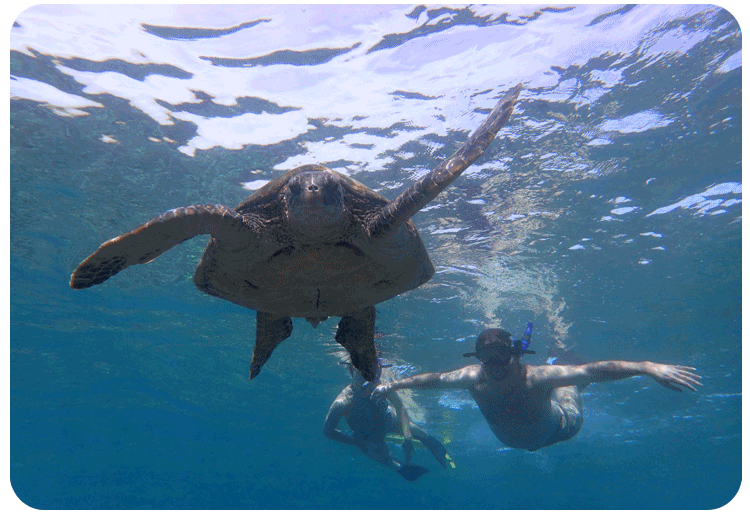 Snorkle sea turtle outigger tours Maui